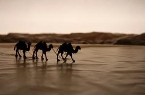- Camels in a landscape